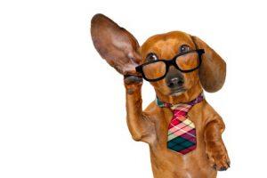 Hund, der aktiv zuhört