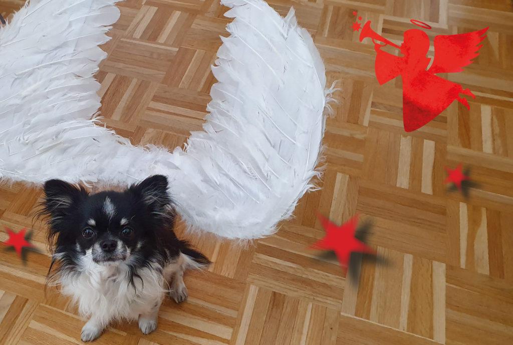 Bürohund Lupo mit Engelsflügeln